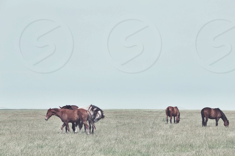 brown horse on green grass field photo