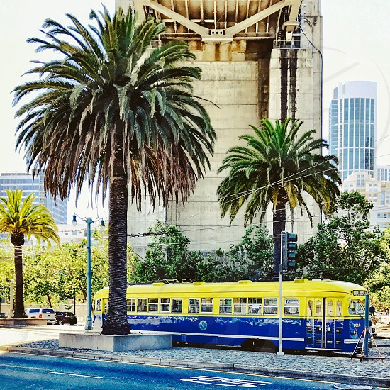 San Francisco streetcar street palm trees photo