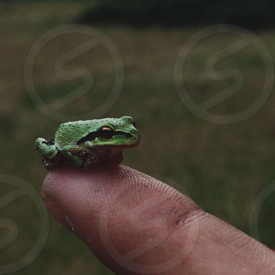tiny green front sitting on human finger tip photo
