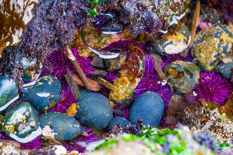 Sea Life Colors photo