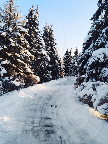 view of white snowy pathway photo