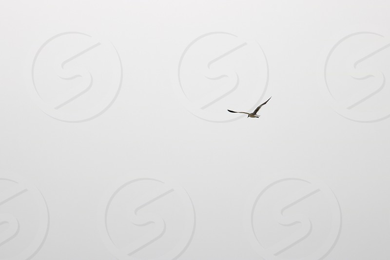 In the distance a seagull flies and soars and glides against a misty sky photo