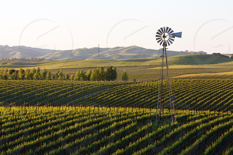 Shot from a random country road in Napa Valley photo