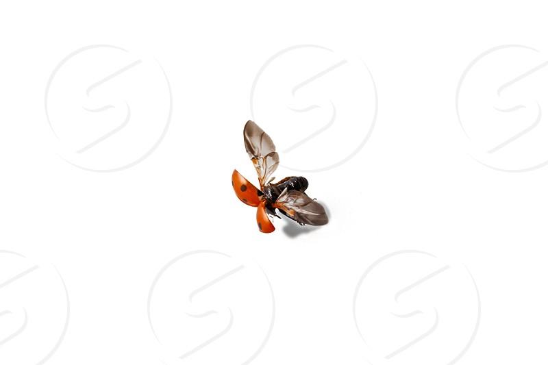 VTOL ladybird  photo