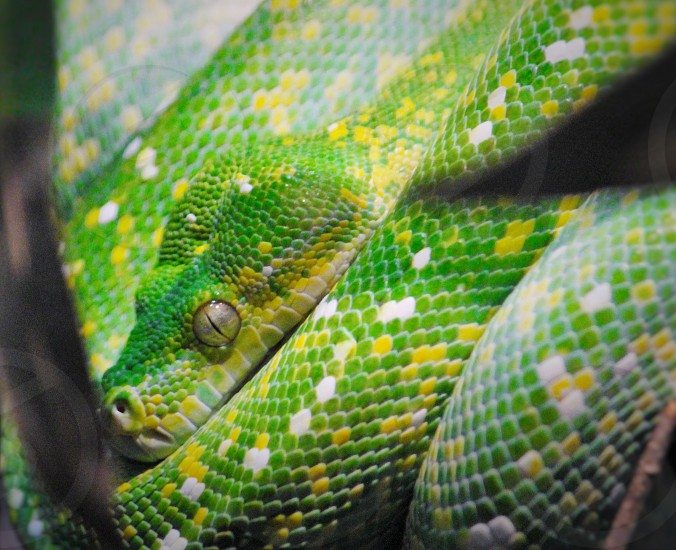 green and white snake photo