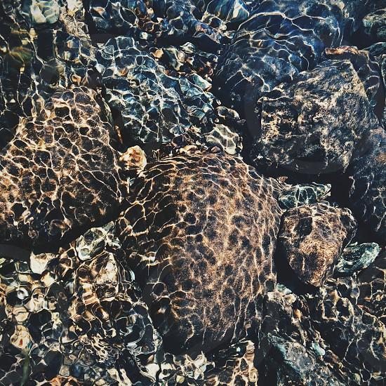 brown and black seashell photo