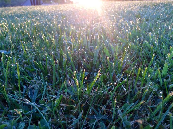 Morning dew :) photo