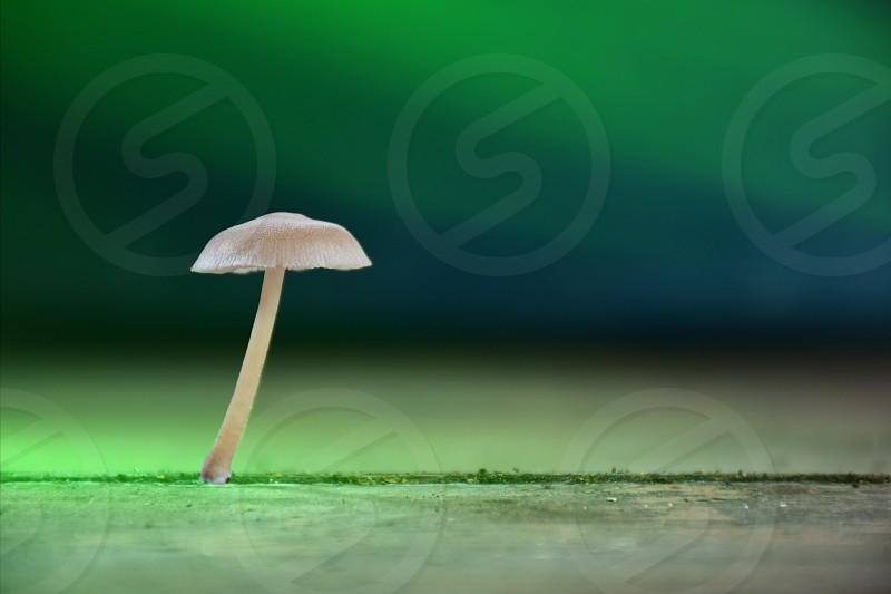 white mushroom near green thread on gray surface photo