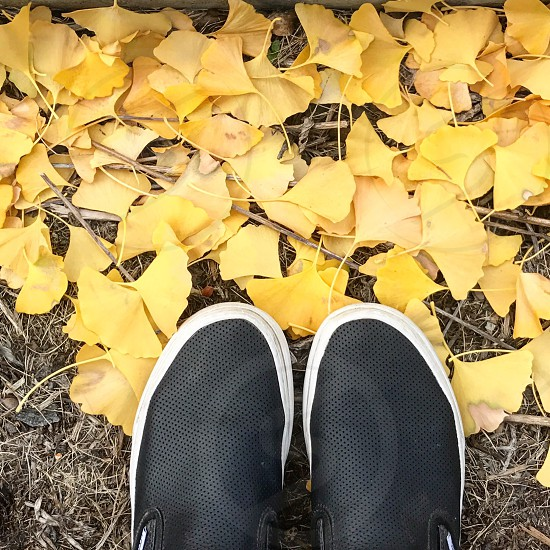 Yellow fall leaves shoes feet fall season photo