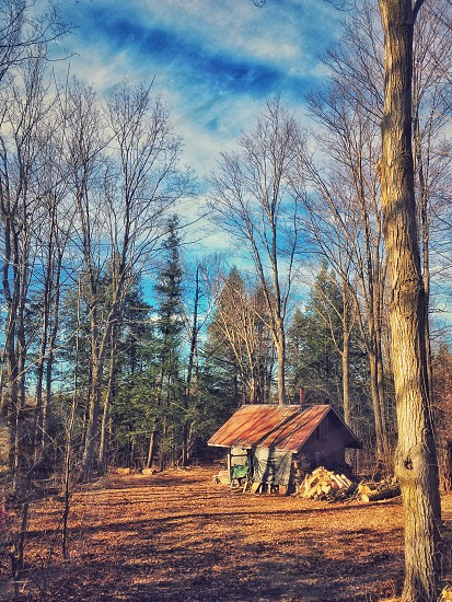 sugar shack syrup maple shed barn woods forest trees winter rustic rural nature outdoors building leaves photo