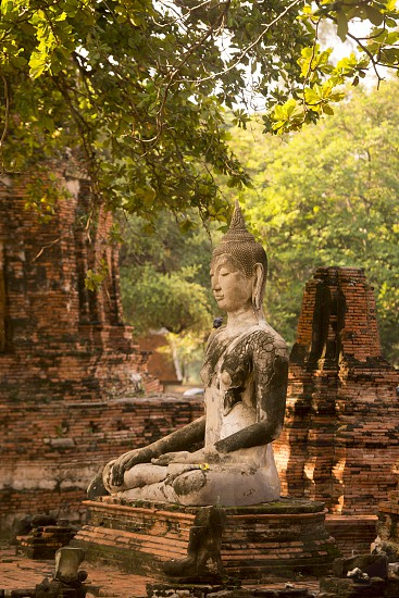 a buddha in th Wat mahathat Temple in the Historical Park  in the city of Ayutthaya north of bangkok in Thailand in southeastasia. photo