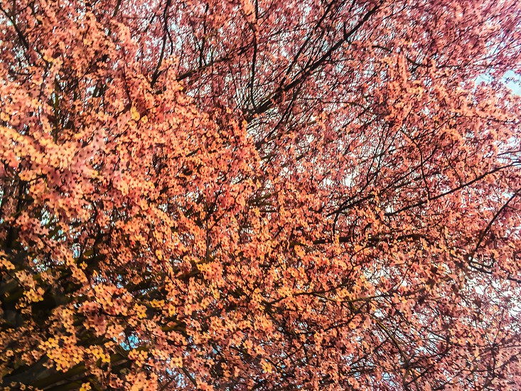 yellow and pink leaves on trees photo