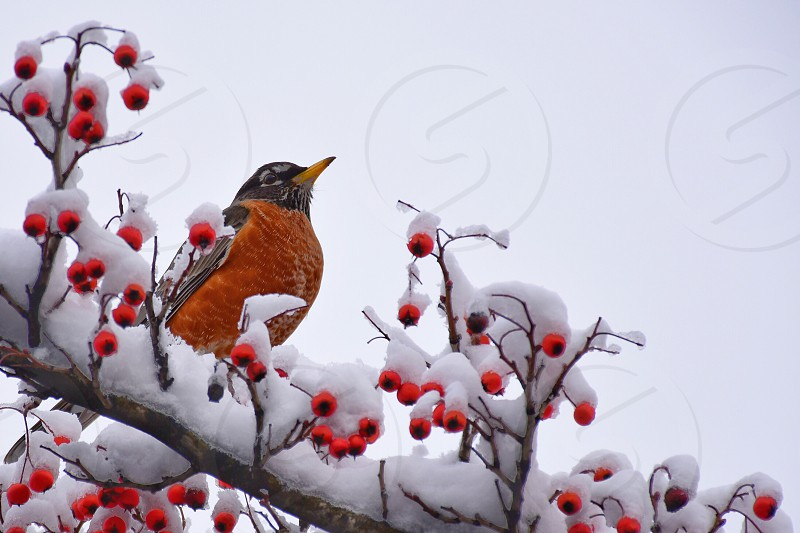 Bird in the winter  photo