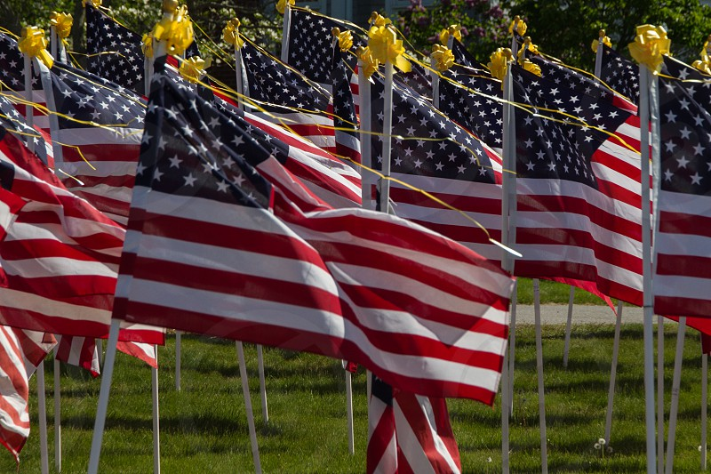 Memorial Day and July 4 Flags in Cohasset MA. photo