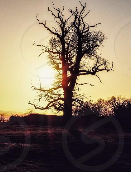 Winter uk sunshine photo