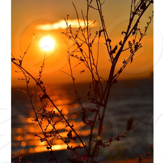 Sunset and wild plant silhouette photo