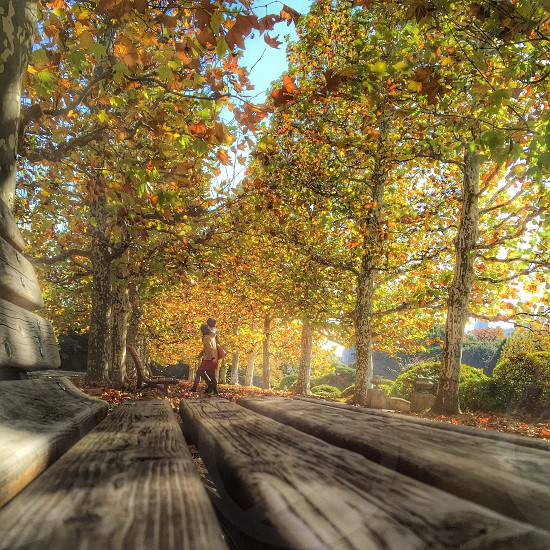 two persons walking on pathway and brown wooden bench photo