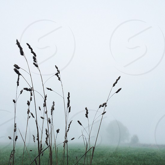 green field with fogs photo