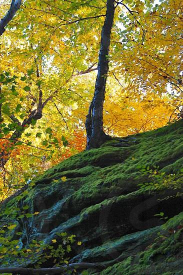 Tree on cliff. Autumn. Yellow. Green. Fall.  photo