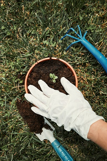 Gardener replanting plant into a new pot. Top view of female hands in gloves planting a plant. Using tools rake and shovel. Real people authentic situations photo
