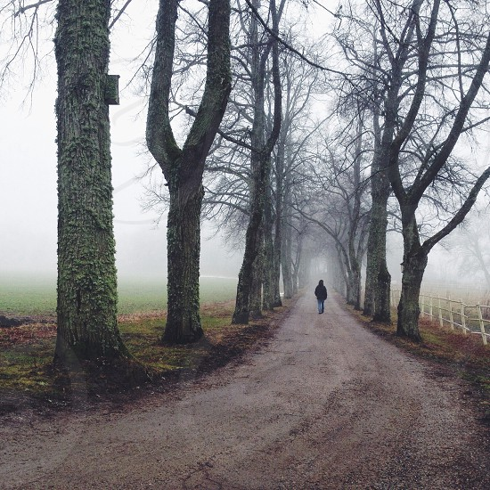 man walking along trees on a foggy day photo
