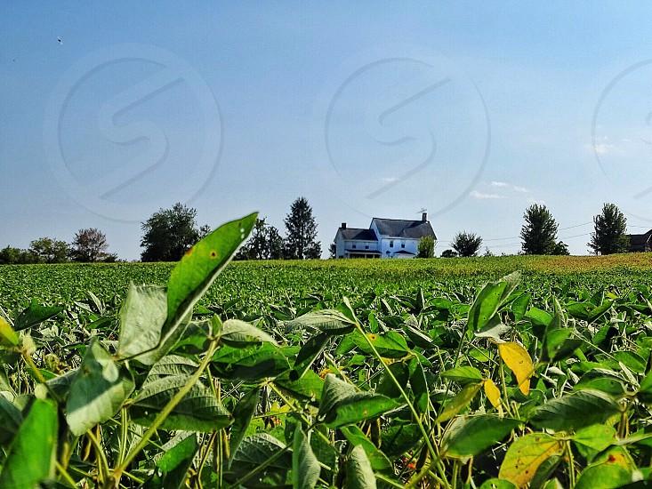 green plant field near white house under white sky photo