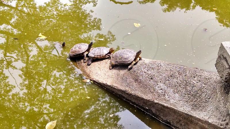 Turtle line pattern. photo