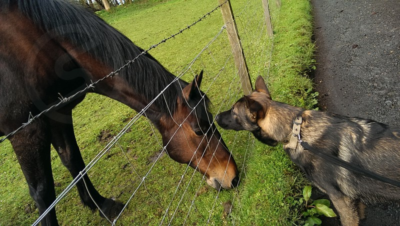 Fordell Firs - Fife Scotland. Dog horse friends green. photo