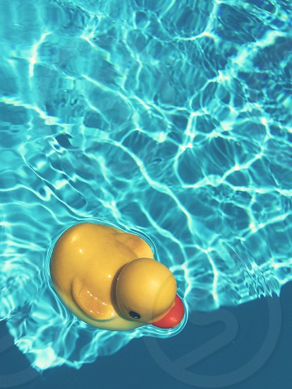 pool duck natural light sunny photo