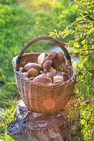 full basket with mushrooms standing on the stub photo