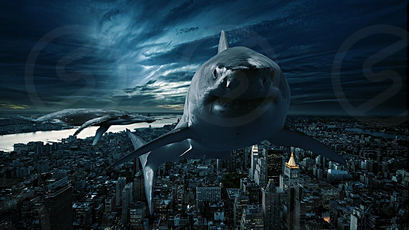 Shark whale flying art cool conceptual city New York Sky Photoshoot  photo