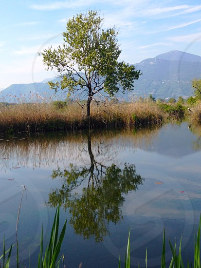 Tree reflection pond spring green nature natural light water. photo