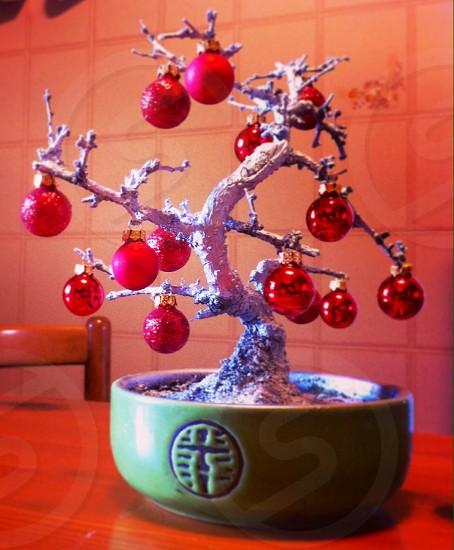 red christmas ball decor in bonsai plant photo