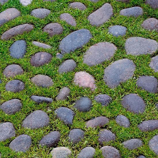 rocks in grass photo