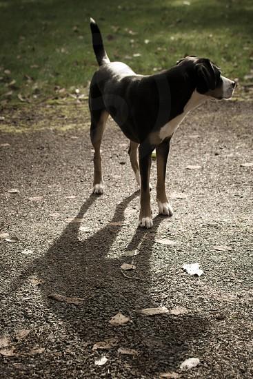 dog and shadow photo