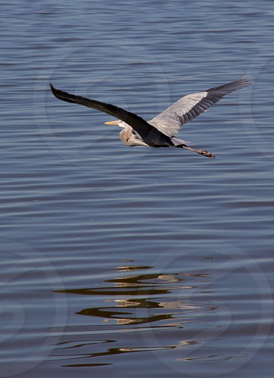 Flying on water photo