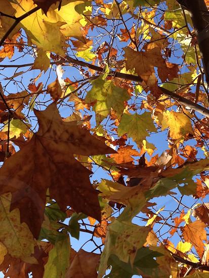 Autumn colors Leaves photo