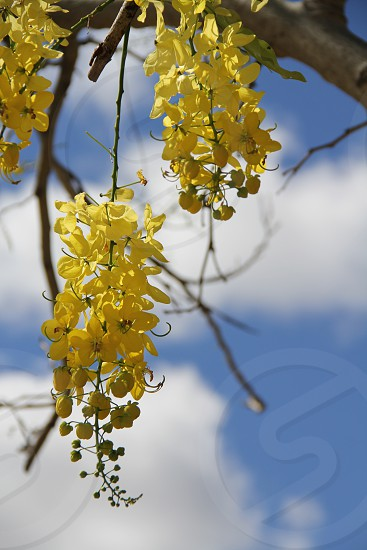 yellow flowers blue sky white clouds outdoors nature no people vertical portrait flower bundle photo