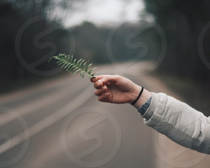 Hand.  photo