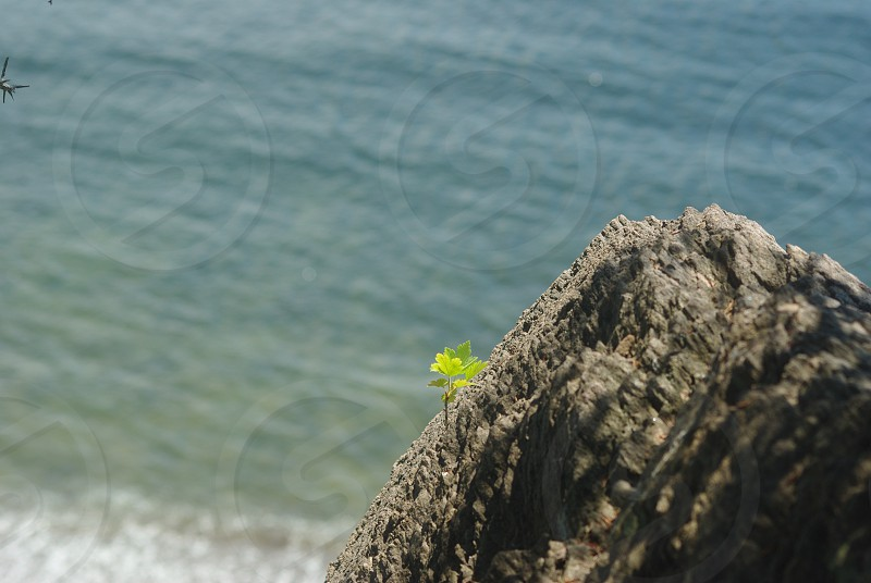 Small greenery on the rock with ocean in the background photo