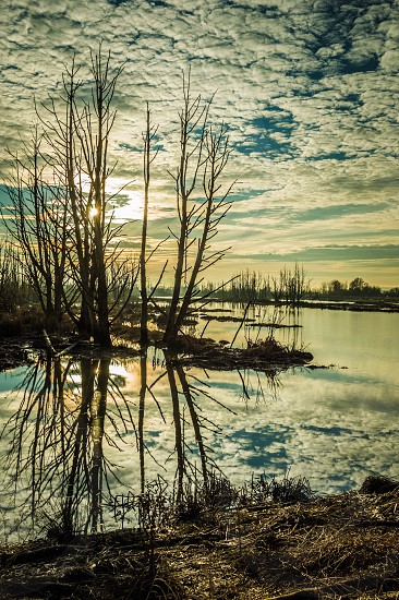 Wiley Slough Reflection  photo
