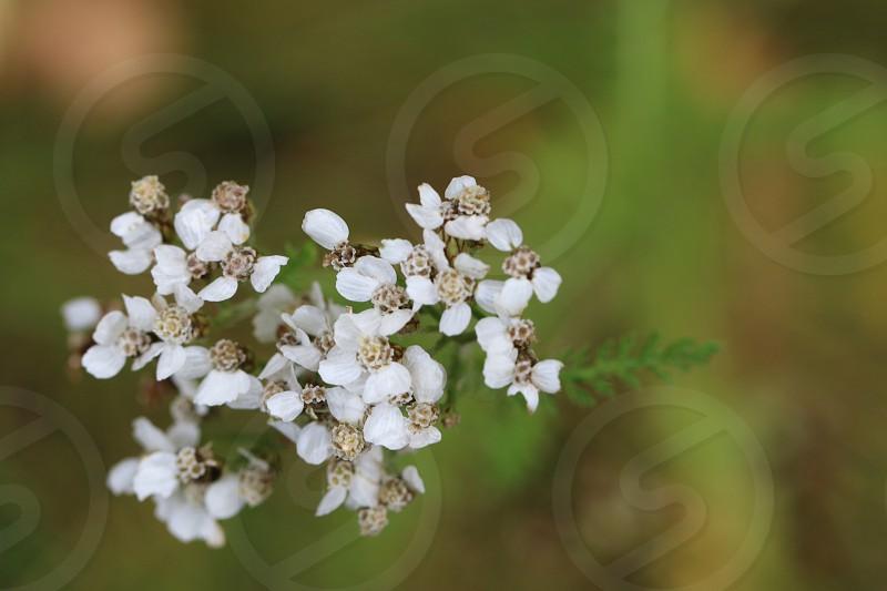 white flowers macro photo