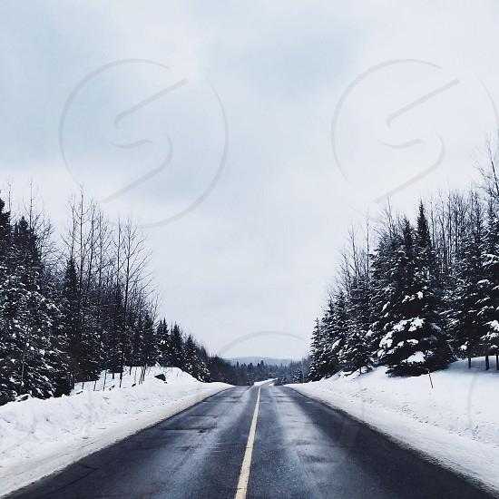 black road white snow and green pine tree along side photo