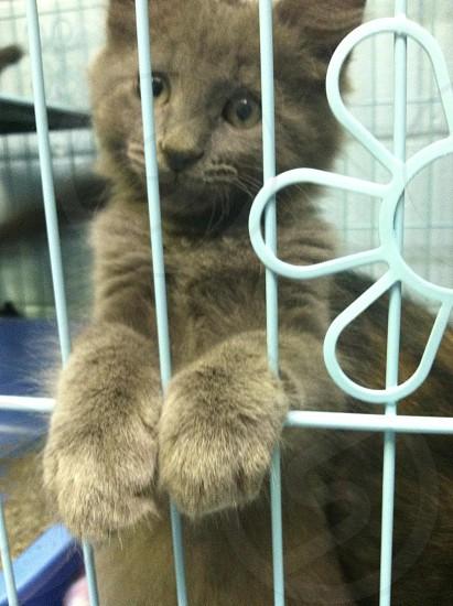 Kitty cute fluffy grey paws  photo
