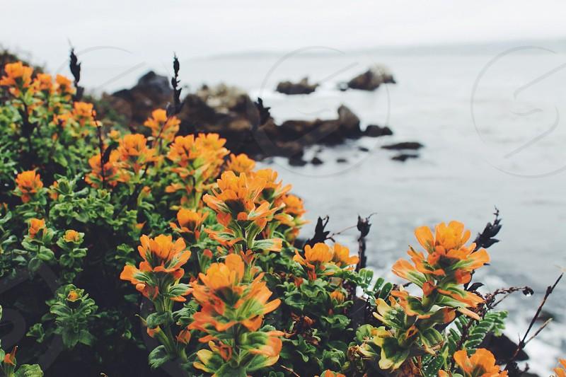 Point Lobos in Big Sur CA photo