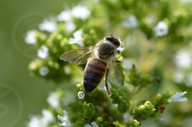 honey bee on green plant photo