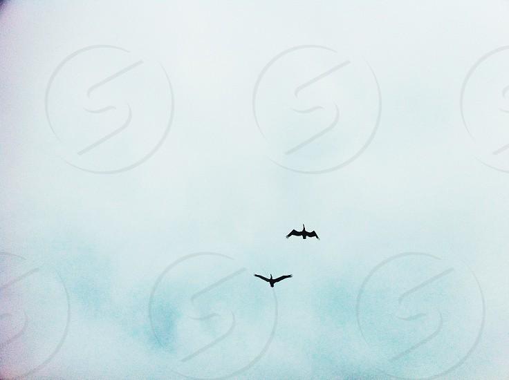 black bird photo