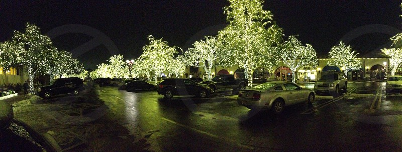 Lit trees christmas  photo