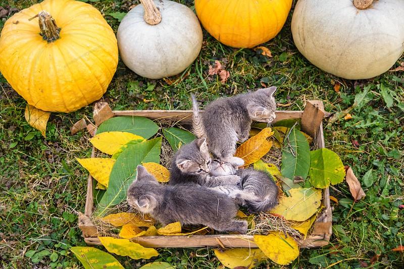 Kittens in the backyard photo