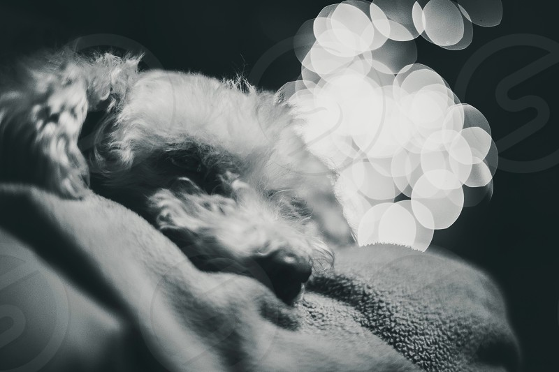 dog bokeh photography photo